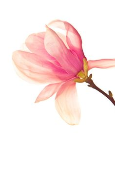 Pink Flower Art Print. Love the negative space.