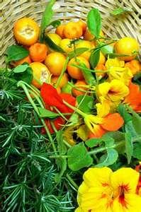 Backyard Vegetable Garden - Culinary Encyclopedia