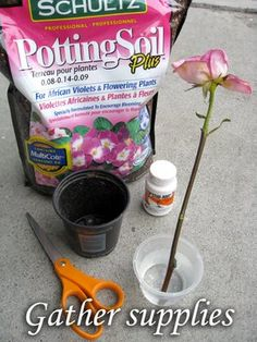 How To Propagate Roses and Geraniums Using Stems : Behind Mytutorlist.com