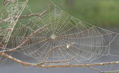 Spider_web_with_dew-400x247dpi.JPG (400×247)