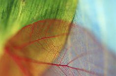Обои боке, зелёный, прожилки, голубой, красный, Листья на рабочий стол | 88664