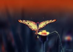 Flying Energy by Eleonora Di Primo on 500px