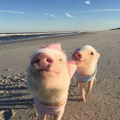 Priscilla and Poppleton ~ a beautiful day at the beach ~ with sandy little chinny chin chins :o)