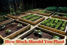How Much To Plant In Your Homestead Garden To Provide A Year's Worth Of Food For The Family