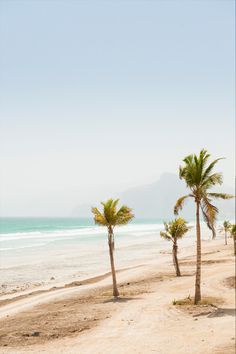 Palm trees line the beaches of Salalah in southern Oman // photo by @justinfoulkes #oman #beach #sea