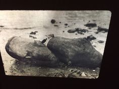 """Edward Curtis """"Whaling Floats"""" Nootka Native American photography 35mm slide  