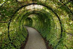 Najniebezpieczniejsze ogrody świata - GeekWeek.pl - Wszystko o nowych technologiach
