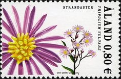 Stamp%3A%20Sea%20Aster%20(Tripolium%20vulgare)%20(%C3%85land%20Islands)%20(Plants)%20Mi%3AAX%20274%2CSn%3AAX%20255%2CYt%3AAX%20274%2CAFA%3AAX%20274%20%23colnect%20%23collection%20%23stamps