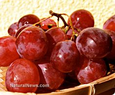 Flavonoids from red grapes and blueberries synergistically boost immune response - Extensive research studies have determined that protective compounds that protect plants from disease can have a similar effect when eaten by humans.