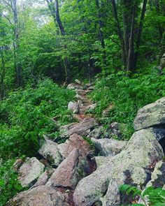 This is what the AT looks like in Pennsylvania. The rocks were out in full force today.