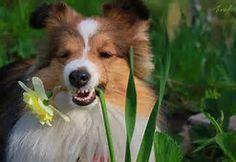 Take that you lousy flower!