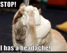 Kitty has a Chiari headache :)