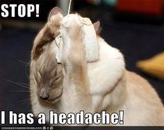 Kitty has a Chiari headache :)