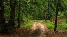 Download wallpaper forest, road, summer, nature free desktop ...