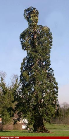 strange-trees http://www.ecoglobalsociety.com/magnificent-trees/