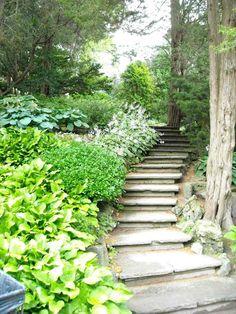 des marches de jardin en dalles et beaucoup d'arbustes verts