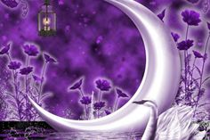 Walls4Joy: Swan of crescent moon resources lovely creative premade attractions in dreams beautiful flowers purple blooms animals pretty lamp moons paintings cool love four seasons nature pond colors s lantern stock images night desktop and mobile background
