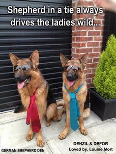 Shepherds in ties !