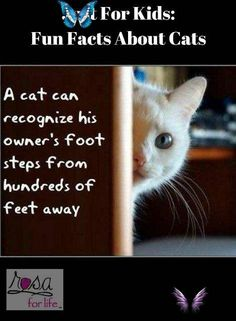 "Just For Kids: Fun Facts About Cats Just For Kids: Fun Facts About Cats. We love to see them, play with them and live with them. But how much do you know about your cat? #rosaforlife<br> ""PIN IT"" for later. We love to see them, play with them and live with them. But how much do you know about your cat? 1. Cats are one of, if not the most, popular pet in the world. 2. There are over 500 million domestic cats in the world. 3. Cats and humans have been associated for nearly 10000 years. 4. Cats…"