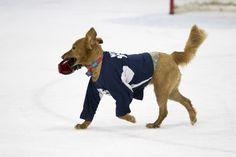 Sled hockey, hockey, sports, sports photography, adaptive sports, photojournalism, team USA, service dog