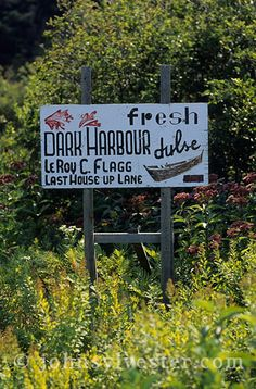 sign;Dark Harbour;dulse;Grand Manan Island;New Brunswick;Canada;seaweed;food;island;Bay of Fundy
