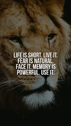 Inspirational Animal Quotes, Uplifting Quotes, Positive Quotes, Motivational Quotes, Life Is Beautiful Quotes, Real Life Quotes, Inspiring Quotes About Life, Lone Wolf Quotes, Lion Quotes