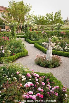 Gravel Path Through California Flower Garden With Statue As Focal Point In  Formal Garden Room Of English (Austin) Roses With Pink Rosa Lill.
