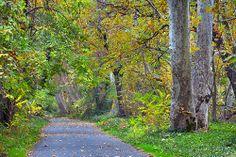 Bidwell Park, Chico California