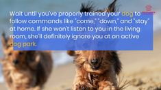Dog park socialization tips Super Cute Dogs, Dog Activities, Perfect World, Dog Park, Listening To You, Training Your Dog, German Shepherd Dogs, Four Legged, Things To Think About