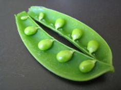 Grow Beans and Peas - wikiHow