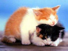 the kitties are sleeping...