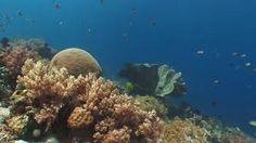 Kuvahaun tulos haulle underwater plants Underwater Flowers, Underwater Plants