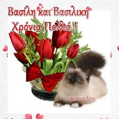 chats - Page 35 Puppy Images, Cute Clipart, Cute Pictures, Planter Pots, Creations, Clip Art, Puppies, Flowers, Plants