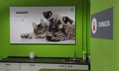 Decoracion Clinica Veterinaria - grupdigital.com impresion digital Vet Clinics, Cat Cafe, Dog Walking, Pet Shop, Animals And Pets, Dogs, Clinique, Boutiques, Interior