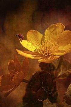 Life is the flower for which love is the honey...Victor Hugo