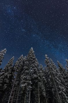 Moonlit | Flickr - Photo Sharing!