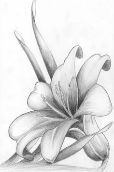 Simple flower pencil drawings for inspiration You are in the right place about drawings for boyfriend Here we offer you the most beautiful pictures about the drawings aesthetic you are … Easy Pencil Drawings, Pencil Drawings Of Flowers, Flower Art Drawing, Art Drawings Sketches Simple, Drawing Art, Drawing Tips, Drawing Ideas, Flower Sketch Pencil, Flower Sketches
