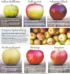 Before the Mac, vintage or heirloom apples date back to colonial time. Now, a number of orchards and apple historians are growing these old varieties again and promoting them to restaurants, distributors and grocers. Apple Types, Apple Varieties, Fruit Garden, Herbs Garden, Starting A Garden, Growing Herbs, Organic Gardening, Vegetable Gardening, Container Gardening