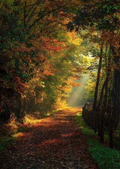 Путь к обретению осмысленности жизни лежит через ценности. Именно ценности несут в себе зародыш осмысленности.