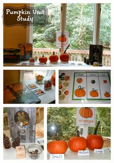 Exploring Pumpkins in Autumn from Natural Beach Living