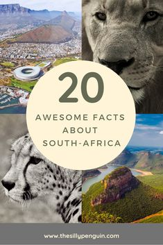 Awesome Facts About South Africa! Awesome Facts, Fun Facts, South Africa Facts, Tours, My Love, Business, Poster, Travel, My Boo