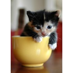 Tiny Animals in Cups—Maximum Cuteness! [25 Pictures] ❤ liked on Polyvore