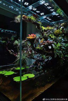 Aquarium Aquascape, Planted Aquarium, Aquascaping, Aquarium Landscape, Nature Aquarium, Frog Terrarium, Aquarium Terrarium, Reptile Terrarium, Terrarium Plants