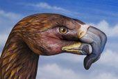 Guido Daniele - Eagle Personal study - 2007