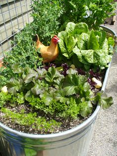 french vegetable garden garden kitchen  random acts of gardening garden tours a photo essay