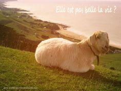 Chèvre zen : elle est pas belle la vie ? One Footprint On The World
