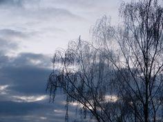 Baum / Sonnenaufgang im Herbst