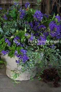 鮮やかブルーのデュランタを使って。。。 の画像|フローラのガーデニング・園芸作業日記