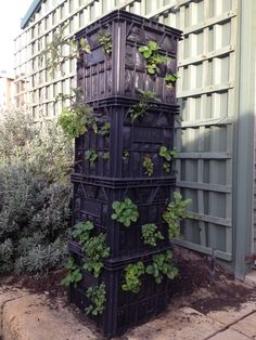 Vertical gardening - recycled milk crates and less water needed. Choose the soils the plants grow in. The soil medium makes a huge difference.