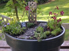 Miniature Gardening News From Around the World | The Mini Garden ...